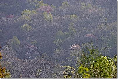 春の山:K20D/DA 50-200mm F4-5.6ED WR