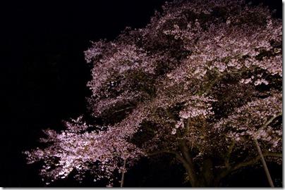 幌萌夜桜:K20D/DA 16-45mm F4 ED AL