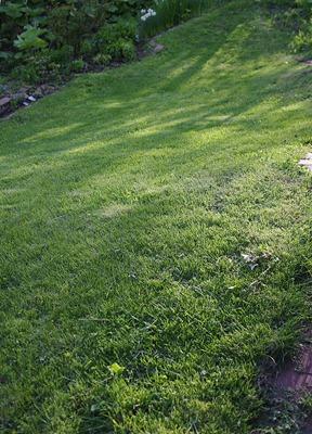 虎刈りの芝生