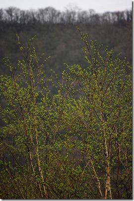 白樺の新緑:K20D/DA 50-200mm F4-5.6ED WR
